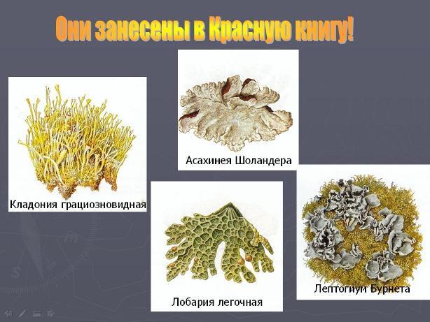 Презентации по биологии