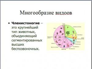 членистоногие презентация