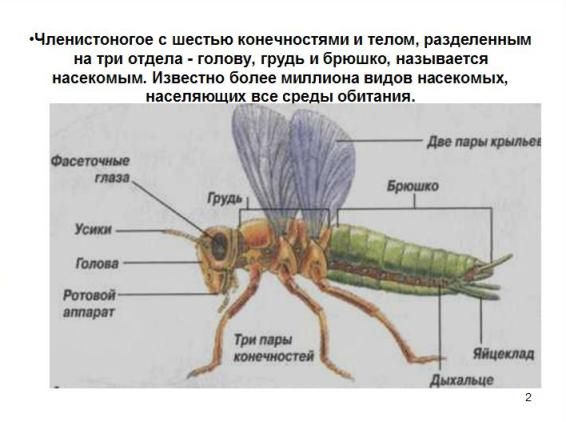 Презентацию по биологии 7 класс
