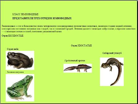 Земноводные презентация по биологии