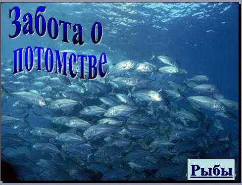 рыбы забота о потомстве презентация биология