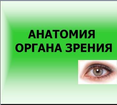 Органы зрения презентация по