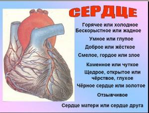 Сердце работа презентация по биологии