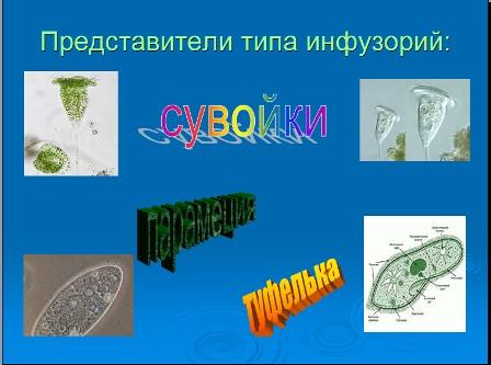 Презентация по биологии инфузория
