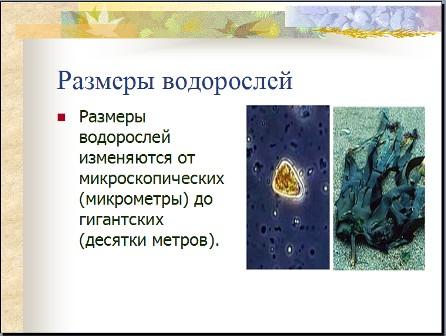 Водоросли презентация по биологии