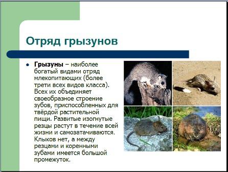Презентация по биологии 7 класс грызун