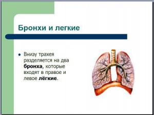 Презентация по биологии дыхание