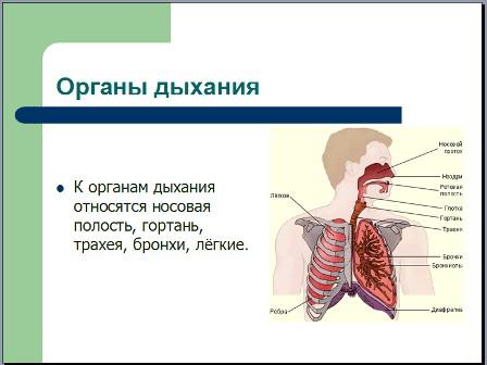 Презентация по биологии дыхание человека