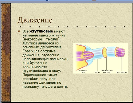 Презентация по биологии 7 класс простейшие