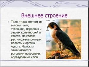 Птицы презентация по биологии