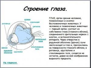 Строение глаза презентация по биологии
