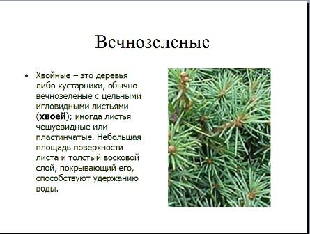 Презентация по биологии хвойные растения