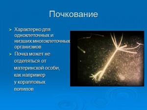 презентация по биологии бесполое размножение