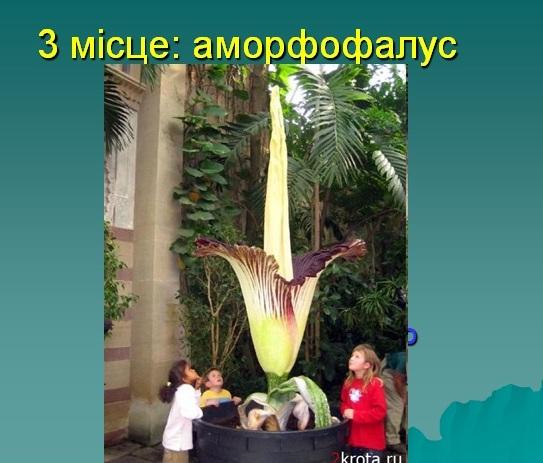 Презентация по биологии удивительные растения
