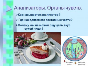 урок биологии презентация анализаторы
