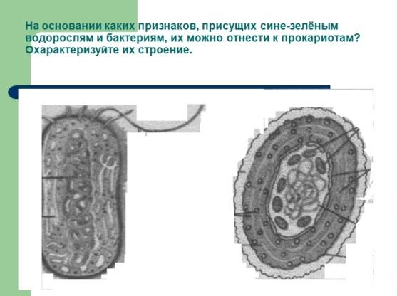 Презентация по биологии 9 класса Клетка