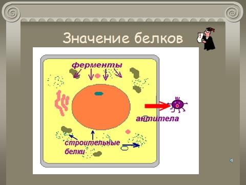 Презентация по биологии 9 класс Биосинтез Белка