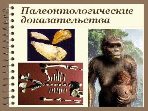 Презентация по биологии 9 класса Происхождение Человека