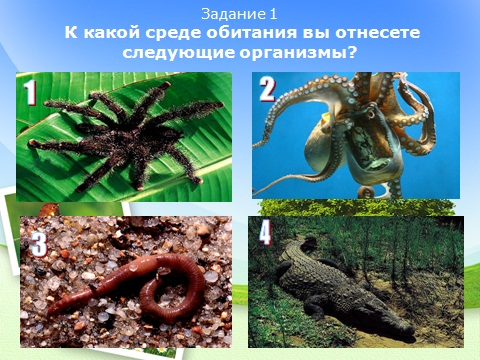 Презентация по биологии Среда обитания организмов