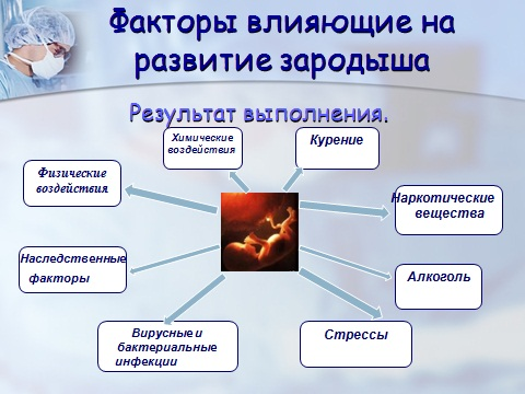 Презентация по биологии 9 класса Эмбриональный этап развития