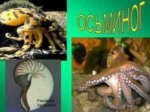 презентация по биологии моллюски 7 класс