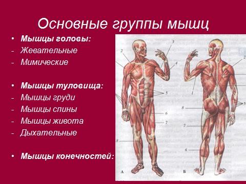 мышцы ног против целлюлита