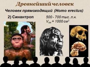 Презентация по биологии 9 класс Эволюция человека