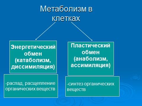 презентация по биологии 8 класс обмен веществ и энергии