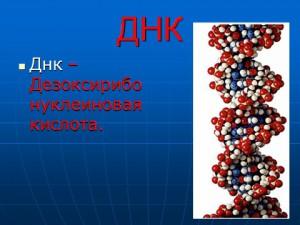 Презентацию скачать бесплатно на тему ДНК