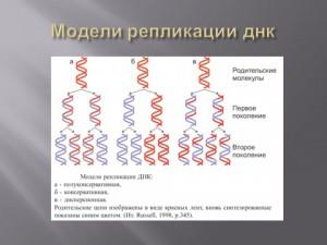Скачать презентацию бесплатно на тему Репликация ДНК биология 9 класс