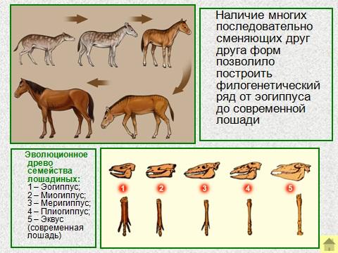 Презентация на тему доказательства эволюции биология 9 класс