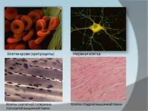 презентация по биологии 9 класса строение клеток