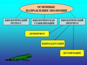 Презентация powerpoint на тему Основные направления эволюции биология 9 класс