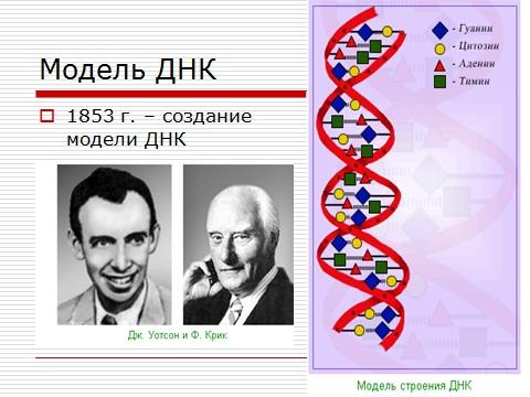 Скачать презентацию по биологии на тему Нуклеиновые кислоты