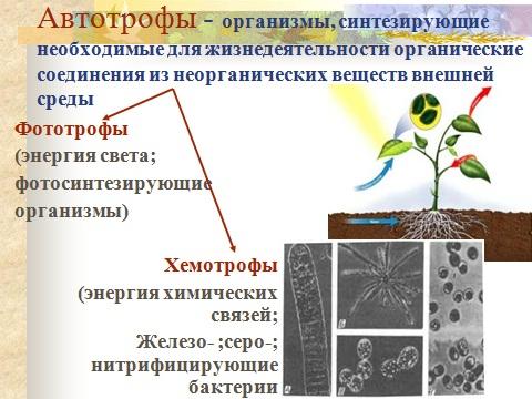 Презентация по биологии 9 класса на тему обмен веществ