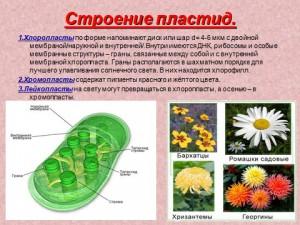 Презентация по биологии на тему клеточные структуры