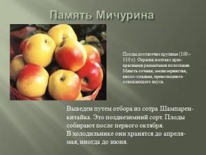 Урок презентация по биологии 10 класса Сорта яблони