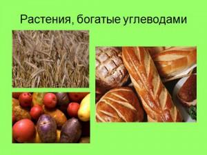 Презентация по биологии 6 класса на тему химический состав растений