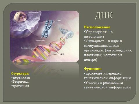 Презентация на тему органические вещества клетки биология 9 класс