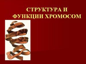 Скачать презентацию на тему строение и свойства хромосом