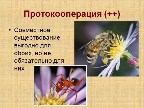 Экологические взаимоотношения