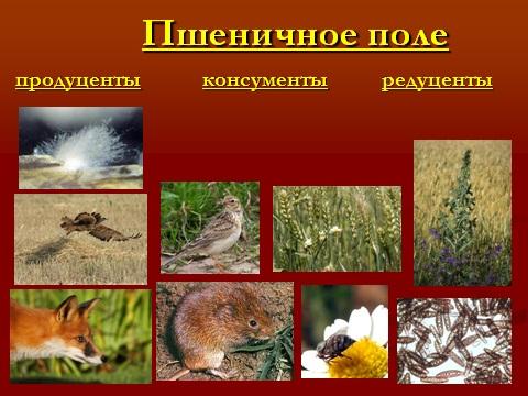 Экология раздел биологии 9 класса