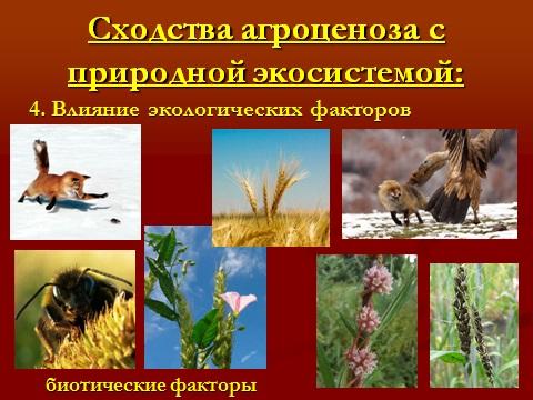 экосистема агроценоза