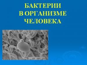 Бактерии в организме человека презентация по биологии