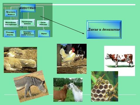 Презентация по биологии Братья меньшие животные