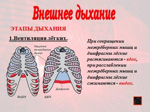 тканевое дыхание