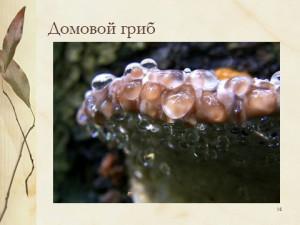 Грибы паразиты - презентация по биологии 6 класс