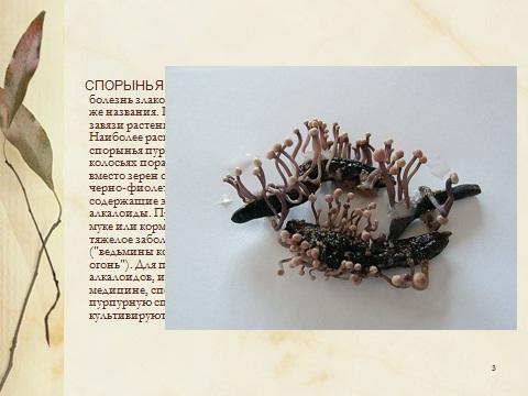 грибы паразиты в теле человека