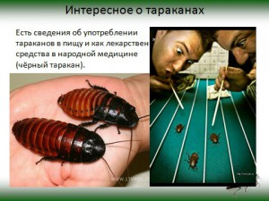 Тараканы уховертки поденки