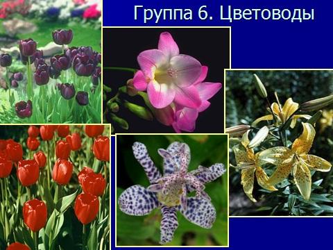 Однодольные растения - семейство лилейные